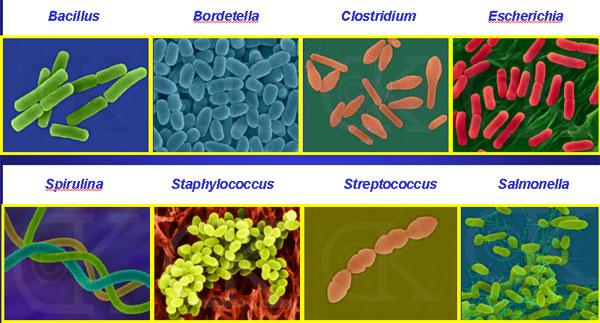 Free Worksheets cholera worksheet : STRUCTURE